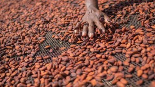 Côte d'Ivoire Seeks €1bn Loan From EU to Boost Cocoa Production